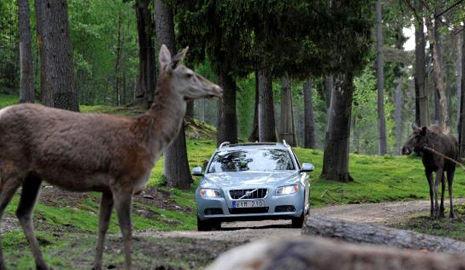 Animales en carreteras