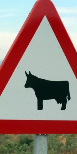 Señal de peligro animales